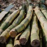 Bamboo sticks by Victoria Priessnitz